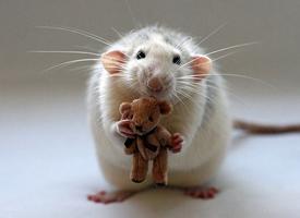 喜欢睡懒觉的小老鼠图片