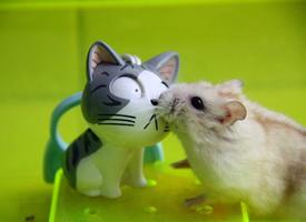 小小只的可爱小老鼠图片