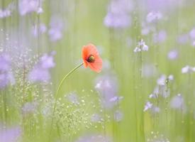 小清新花卉护眼桌面壁纸图片