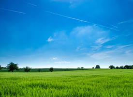 绿色护眼田园风光图片桌面壁纸