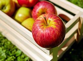 脆口香甜红苹果图片欣赏