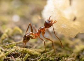 辛勤工作的蚂蚁图片欣赏
