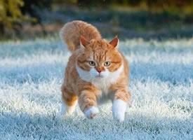 俄罗斯胖橘今年的霜雪地玩耍照