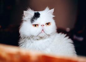 蠢萌治愈加菲猫图片