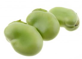 营养价值丰富的绿色蚕豆图片