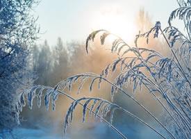美丽的雾凇风景图片