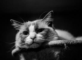 呆萌可爱猫咪图片桌面壁纸