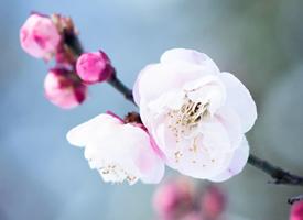 小清新唯美花卉图片手机壁纸