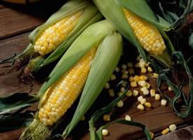真实的剥开玉米图片欣赏