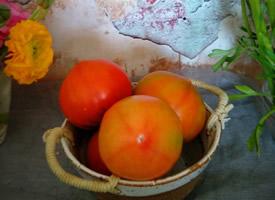 青红西红柿艺术照图片
