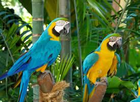 一组高清鹦鹉鸟图片
