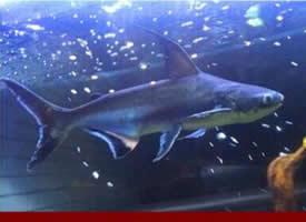 一组热带成吉思汗鱼图片