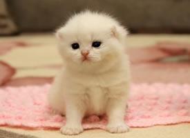 一组软绵绵的小猫咪图片