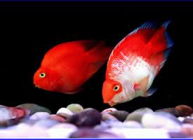 一组鱼缸里的热带鱼图片