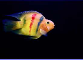 漂亮的热带鱼图片