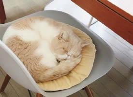 每天都喜欢睡觉的小猫咪图片