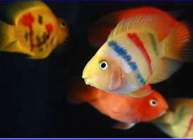 活泼可爱的热带鱼图片
