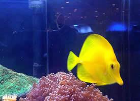 人工饲养的热带鱼图片