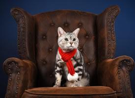 一只听话可爱的小猫咪图片