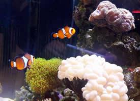 一组美丽悠闲的热带鱼图片