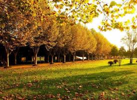 唯美金秋美丽的落叶风景图片