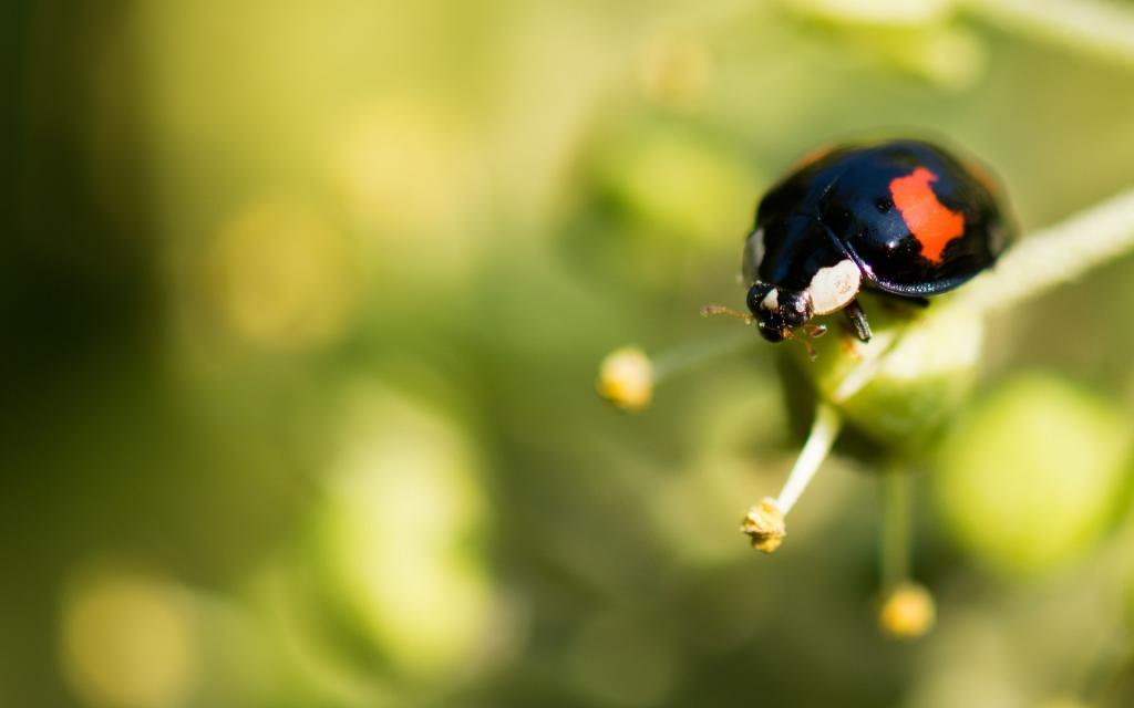 七星瓢虫在树叶上趴着的图片