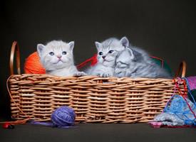 可爱软萌的猫咪图片高清壁纸