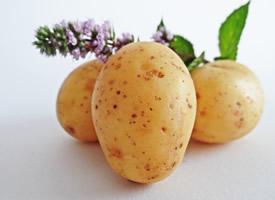 吃了不饿的土豆图片欣赏
