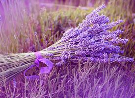 紫色薰衣草唯美高清桌面壁纸