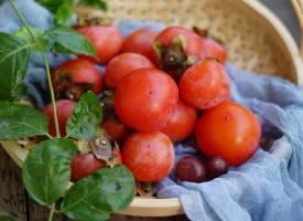 一组红彤彤的柿子图片