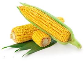 粒粒饱满金黄玉米图片大全