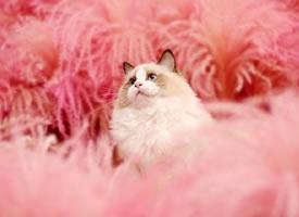 一只美美的小猫咪图片欣赏