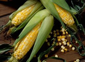 一组颗粒饱满的金黄色玉米