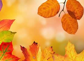 深秋落叶唯美高清桌面壁纸