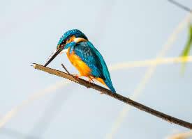 一组美丽的翠鸟图片