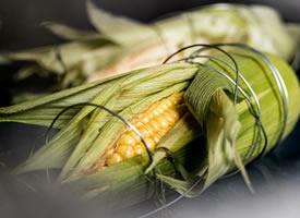 玉米的形态美图片欣赏