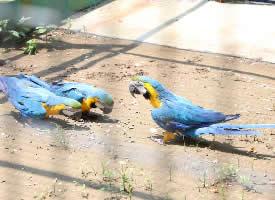 动物园里的鹦鹉图片