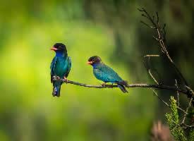 站在枝头上的翠鸟图片