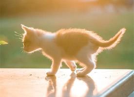 软萌可爱的猫咪图片手机壁纸