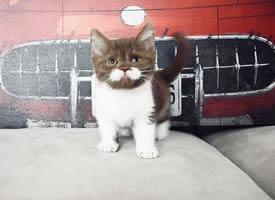 长着小白胡子的猫咪