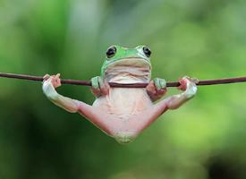 近距离青蛙抓拍摄影照片