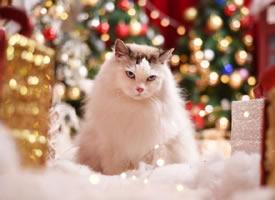 一组帅气严肃的小猫图片