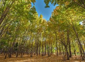 一组秋季树林风景图片