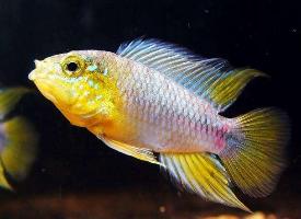 一组机灵可爱的热带鱼图片