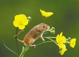 一组活跃可爱的小老鼠图片