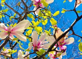 繁花朵朵,生机勃勃的海棠花