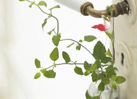 小清新室内盆栽图片高清宽屏桌面壁纸