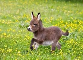 一波萌萌哒的小驴,小可爱