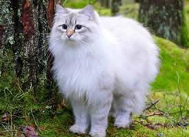 一组带有仙气的猫咪图片