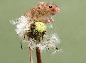 春天里的小老鼠图片欣赏